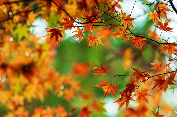 ストレス解消・美肌・ダイエット 全てに効く「秋の散歩」!